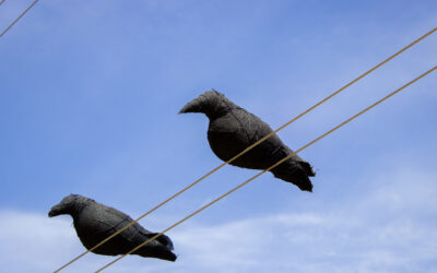 Birds on a Wire/Lessons from Nature